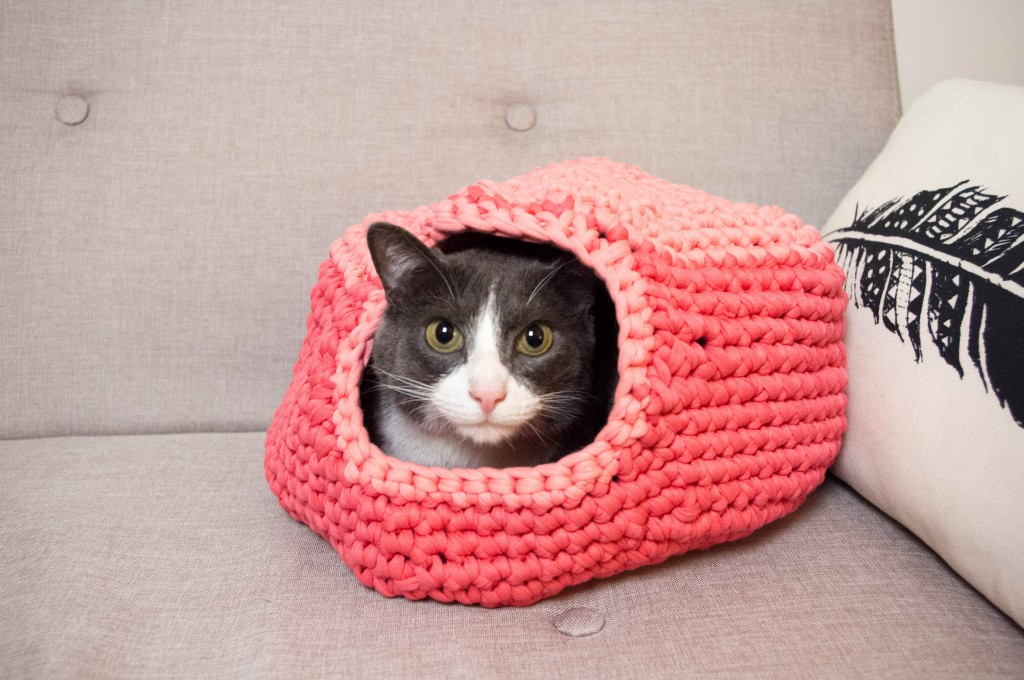 igloo à chat